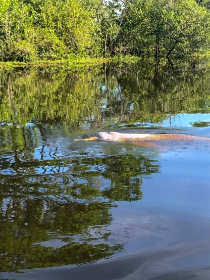 Pink River Dolphins!